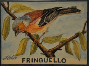 Fringuello